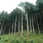 使用した木材を切り出した森