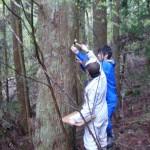 立木ヤング測定